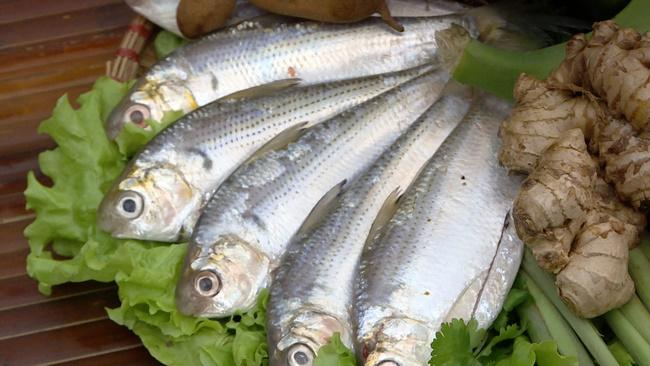 Cá mòi rất tốt cho sức khỏenên rất được chuyên gia khuyến khích sử dụng