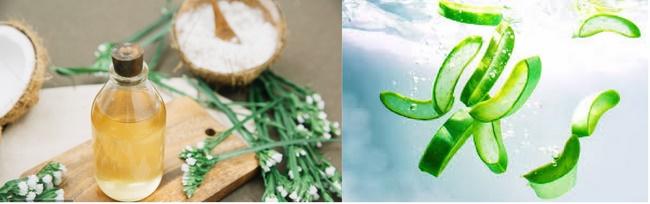 Điều trị mụn bằng dầu dừa, đường và nha đam