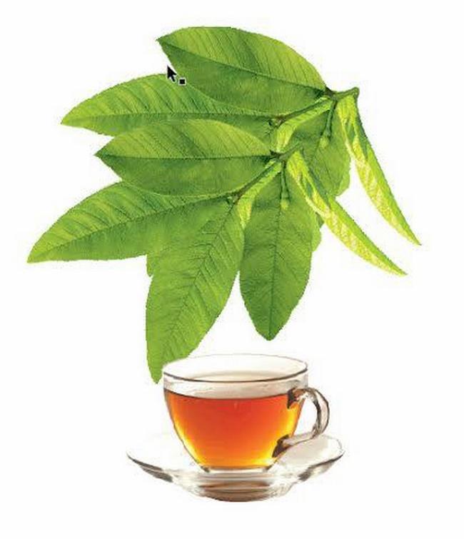 Uống nước trà lá ổi