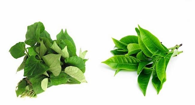 Mặt nạ rau diếp cá với trà xanh trị mụn thâm hiệu quả
