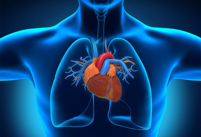 Đạp xe hỗ trợ điều trị các bệnh tim mạch nhờ khả năng kiểm soát lượng Cholesterol trong máu tốt