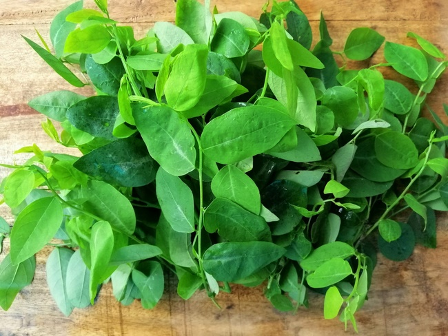Giảm cân bằng rau ngót – cách đánh bay lớp mỡ thừa đơn giản tại nhà