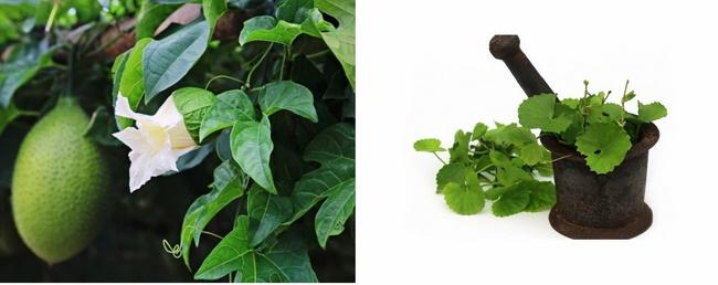 Kết hợp rau má và lá gấc loại bỏ nốt thâm hiệu quả