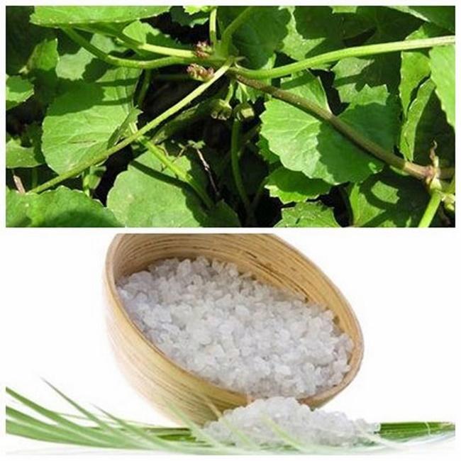 Loại bỏ vết thâm và ngừa sẹo bằng rau má và muối