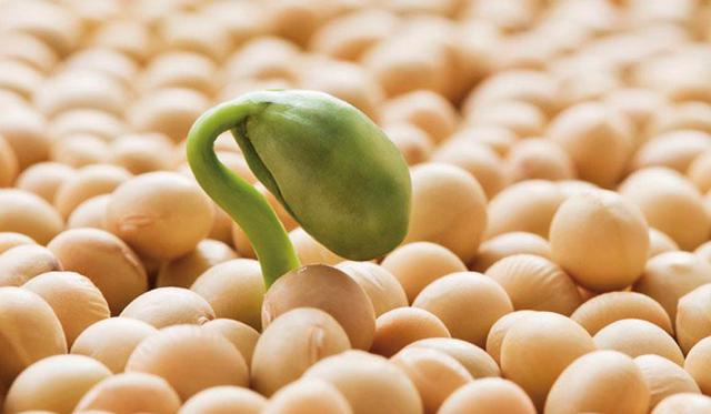 [HỎI – ĐÁP] Cách uống mầm đậu nành giảm cân hay tăng cân?